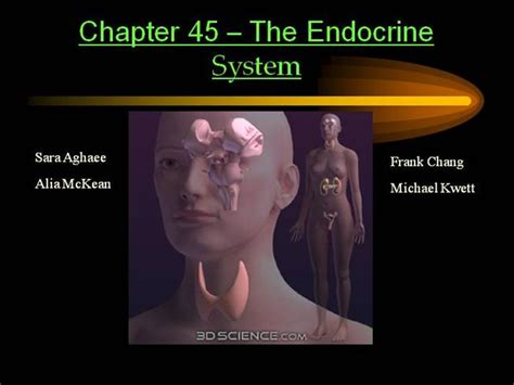 Endocrine System Authorstream Endocrine System Powerpoint