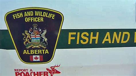 6 albertans fined more than 71k for poaching offences