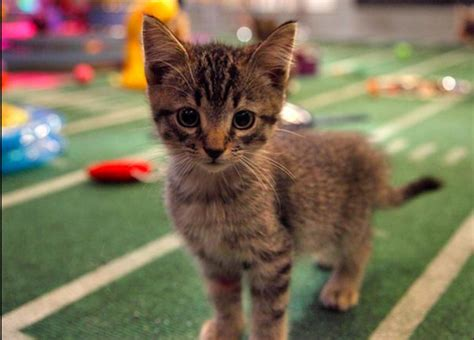 animal planet puppy bowl the best part of puppy bowl ix the halftime show catster