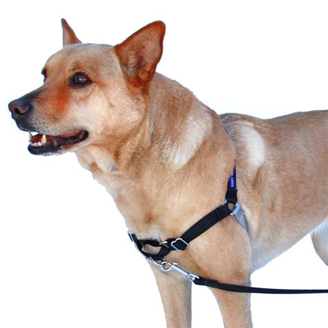 collars for dogs that pull petsafe anti pull harness easy walk 174 petsonline