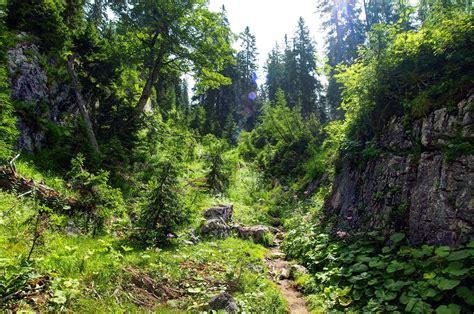 wilderness background wilderness background by burtn on deviantart