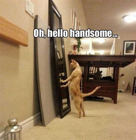Funniest Cat Memes - top 30 funny cat memes quotes and humor