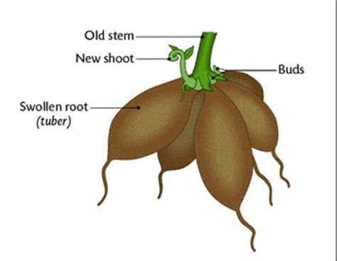 vegetative propagation by roots sexual reproduction in flowering plants biology4isc
