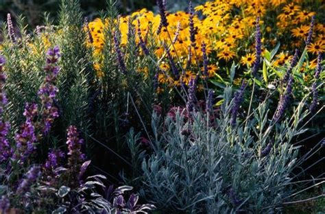 perennial flowers that repel insects