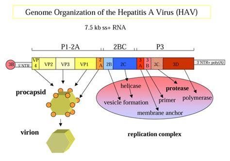 Obat Interferon obat hepatitis b