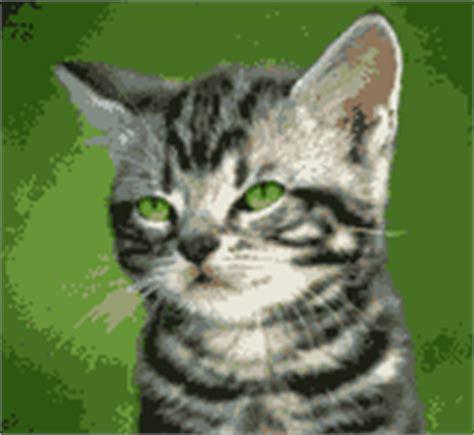 Lu Tembak Sepeda dp bbm lucu kucing ngeledek dp bbm lucu animasi bergerak