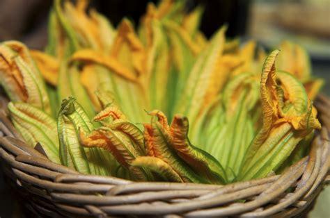 fiori di i fiori di zucca come pulirli e cucinarli