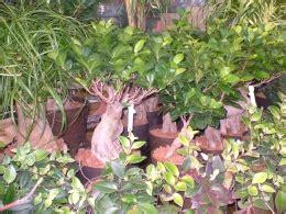 garten bäume rothe gartenbau berlin premium g 228 rtnerei floristik