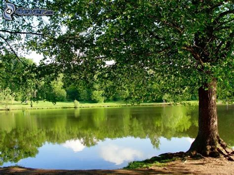 lagos möbel lago en el bosque