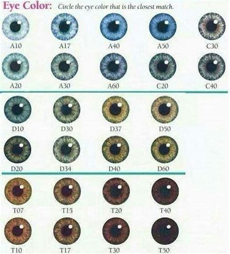 genetics of eye color best 25 eye color chart genetics ideas on