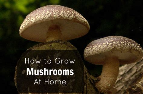 growing mushrooms at home hairstyle 2013