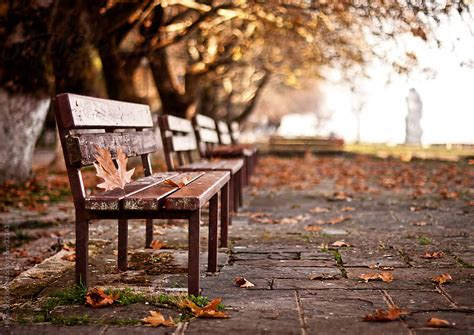 fall bench park bench in the fall by helen sotiriadis stocksy united