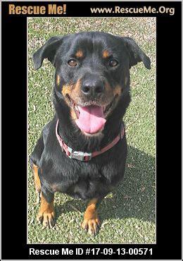 rottweiler rescue near me california rottweiler rescue adoptions rescueme org