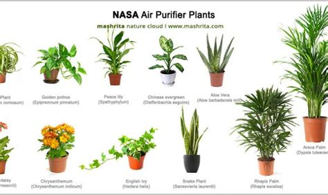 best 10 air purifying plants with nasa ratings blog chinese evergreen aglaonema varieties part 2