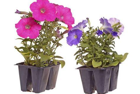 Gardenias by Plantas De Sombra Para Decorar Y Como Cuidarlas