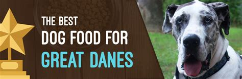 best food for great dane puppy great danes food ratings