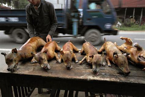 dog house thailand luke duggleby photography thailand s illegal dog meat trade