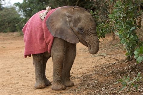 comfort sucking these 7 elephants are being extra adorable for world