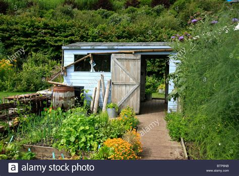 garden vegetable patch typical fashioned garden shed and vegetable