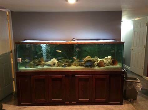 aquascaping african cichlid aquarium 220 gallon african cichlid aquarium here in louisville ky fishy fishy pinterest