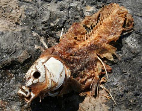 imagenes fuertes de cadaveres en descomposicion la ciencia de un proceso de descomposici 243 n batanga