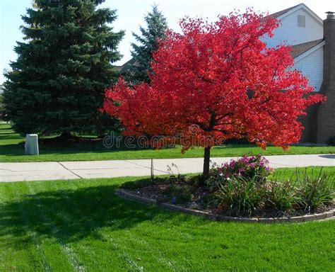 Baum Mit Roten Bl Ttern 136 by Baum Im Herbst Mit Vibrierenden Roten Bl 228 Ttern Stockfoto