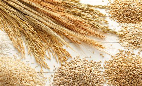 di commercio di treviso prezzi cereali grano tenero e orzo sugli scudi stabili duro e mais
