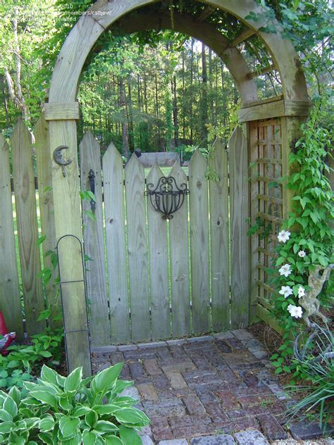 backyard gates wooden gate and whimsical designs joy studio design