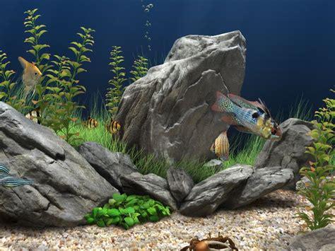 best fish screensaver best 25 aquarium screensaver ideas only on