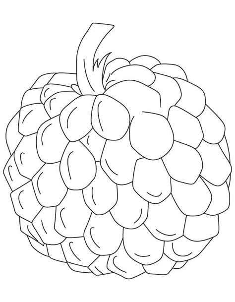 custard apple coloring page custard apple clipart black and white 10 clipart station