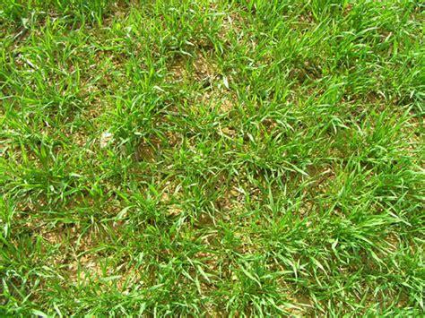 croatia grass floor texture by ribot stock on deviantart