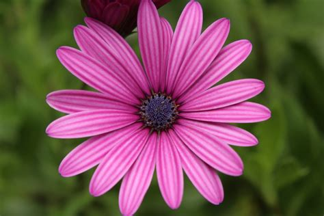 Flower Up up of pink flower blooming outdoors 183 free stock photo