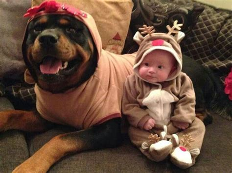 rottweiler and baby best 25 baby rottweiler ideas on