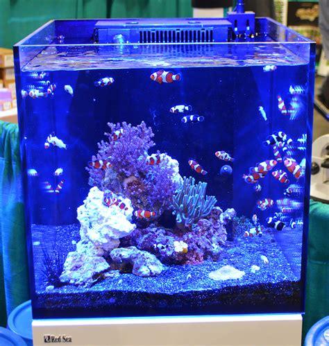 Aquarium Fish Model Cumi 13 Liter saltwater tanks of the aquatic experience 2016