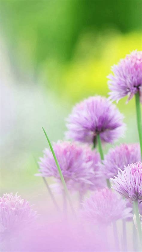abbeville floral wallpaper pink natural free natural pink flower sony xperia z2 wallpapers