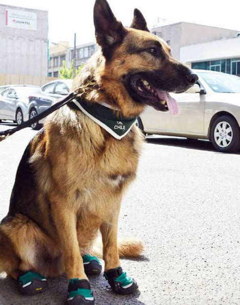 dogs wearing shoes 50 mildly interesting things of january 2015