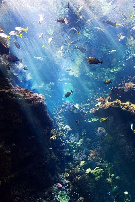 Underwater Iphone Wallpaper | iphone wallpaper underwater 10 handpicked ideas to