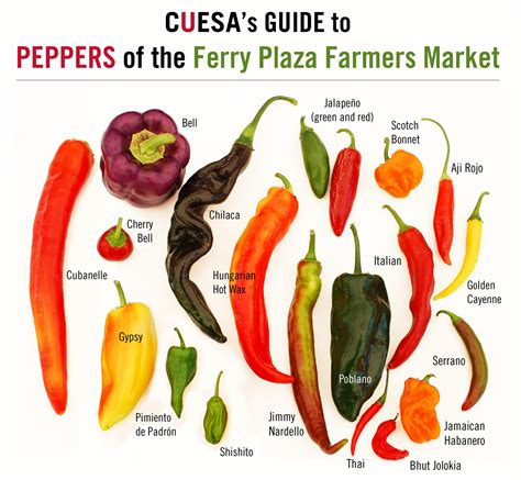 types of garden peppers pepper picture chart sweet to heat a guide to