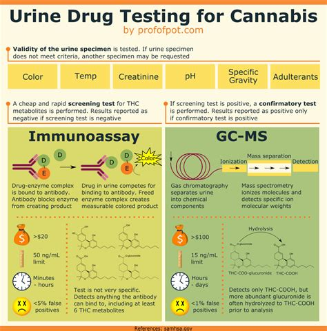 test urine thc guide to urine testing for marijuana with infographic