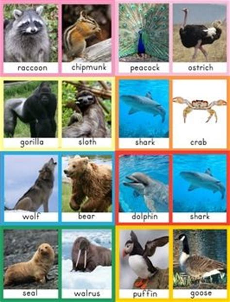 printable real animal flash cards compare and contrast animal cards animal cards compare