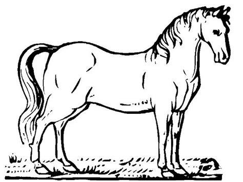 dibujos para colorear de caballos free coloring pages of los caballos de mar