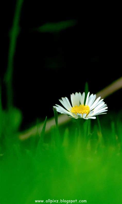 photographyblogwallpapershd imageshd wallpapers