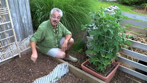 Paul The Gardener by Paul Ggtv What S Happening With Vegetable