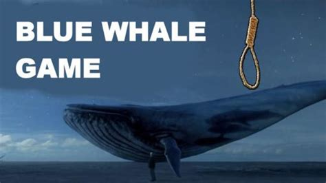 wale gane blue whale online suicide game to hit sa soon 4 things
