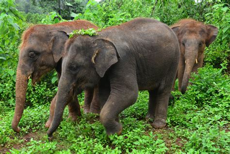 Three Adorable Babies at an Elephant Sanctuary in Chiang ...