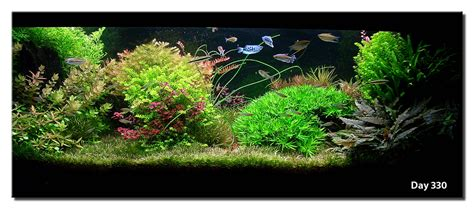 aquascape forum aquascape of the month april 2008 quot cosmopolis