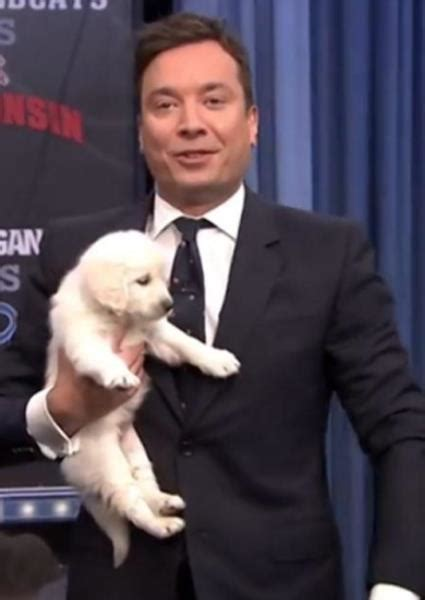 jimmy fallon puppies jimmy fallon uses puppy powers to predict ncaa hoops ch