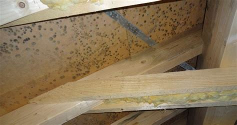 Schimmel Im Dachstuhl Neubau 6851 schimmel im neubau das experteninterview