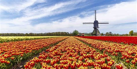 Amsterdam and the Keukenhof bulb fields   Osprey Holidays