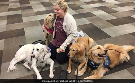 therapy las vegas to vegas with therapy dogs comfort survivors of las vegas mass shooting